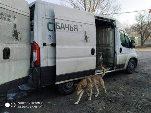 11 безпритульних тварин з Кагарлика стали пацієнтами київської клініки
